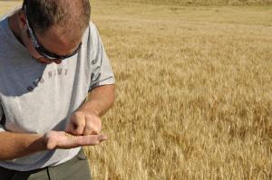 Grain inspection